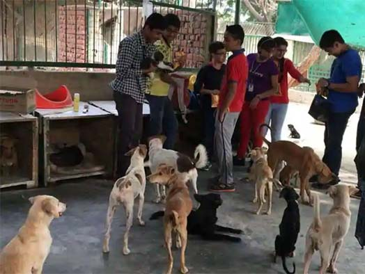 Animal protection is a social responsibility